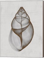 Achatina Shell Fine-Art Print