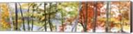 Autumn Lake II Fine-Art Print