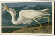 Great White Heron Fine-Art Print