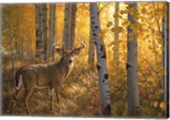 Whitetail in Aspens Fine-Art Print
