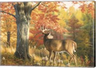 Looking Back Fine-Art Print