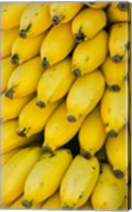 Oman, Dhofar Region, Salalah. Local bananas for Sale Fine-Art Print