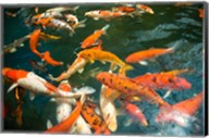 Ornament Koi or Common Carp, Shopping Mall Pond, Malacca, Historic Melaka, Malaysia Peninsula, Malaysia, SE Asia Fine-Art Print