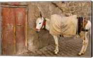 Donkey and Cobbled Streets, Mardin, Turkey Fine-Art Print