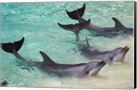 Dolphins, Sea World, Gold Coast, Queensland, Australia Fine-Art Print