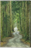 Road through Rainforest, Lamington National Park, Gold Coast Hinterland, Queensland, Australia Fine-Art Print