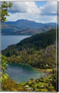 Queen Charlotte Track, Marlborough Sounds, South Island, New Zealand Fine-Art Print