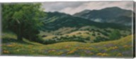 Spring in Carmel Valley Fine-Art Print