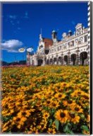 Historic Railway Station and field of flowers, Dunedin, New Zealand Fine-Art Print