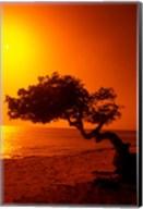 Lone Divi Divi Tree at Sunset, Aruba Fine-Art Print
