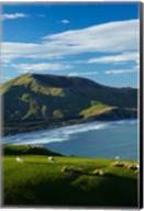 Sheep grazing near Allans Beach, Dunedin, Otago, New Zealand Fine-Art Print