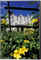 Yellow flowers, St Nicholas Abbey, St Peter Parish, Barbados, Caribbean Fine-Art Print