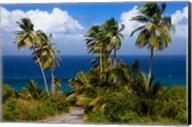 Palm trees, Barbados at Bathsheba Fine-Art Print