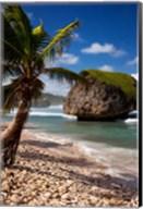 Bathsheba Rock, Barbados, West Indies Fine-Art Print