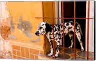 Spotted dog and colorful wall in Trinidad Cuba Fine-Art Print