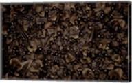 Madagascar, Ankarana, Tongue-clicking fruit bat wildlife Fine-Art Print