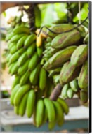 Cuba, Vinales, El Jardin de Caridad, Bananas Fine-Art Print