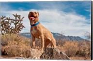Pitt Bull Terrier dog Fine-Art Print