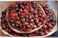Nutmeg in Public Market, Castries, Caribbean Fine-Art Print