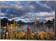 Wildflowers, Jasper National Park, Alberta, Canada Fine-Art Print