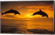 Silhoutte of Bottlenose Dolphins, Caribbean Fine-Art Print