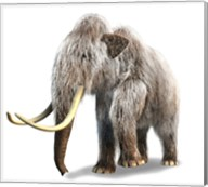 Woolly Mammoth, White Background Fine-Art Print