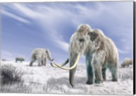 Two Woolly Mammoths in a Snow Covered Field with a Few Bison Fine-Art Print