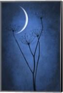 Blue Crescent Moon Fine-Art Print