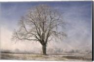 The Tree Fairy Tale Fine-Art Print