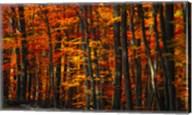Forest Density Fine-Art Print
