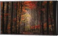 Orton Wood Fine-Art Print