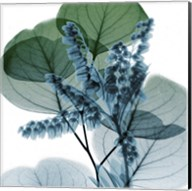 Lilly Of Eucalyptus 2 Fine-Art Print