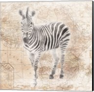 African Animals - Zebra Fine-Art Print