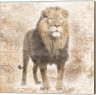 African  Animals - Lion Fine-Art Print