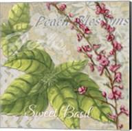 Herbs 4 Basil Fine-Art Print