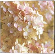 Gilded Hydrangea I Fine-Art Print