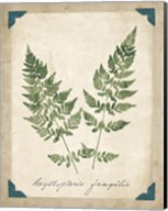Vintage Ferns VII Fine-Art Print