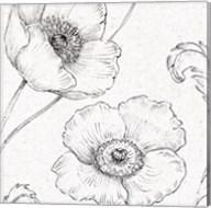 Blossom Sketches I Fine-Art Print