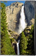 Upper and Lower Yosemite Falls, Merced River, Yosemite NP, California Fine-Art Print