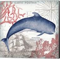 Coastal Sea Life VI Fine-Art Print