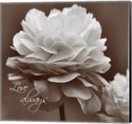 Sepia Blossoms II Fine-Art Print