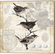 Botanical Birds Black Cream I Fine-Art Print