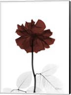Ox Blood Rose 2 Fine-Art Print