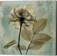 Rose 8 Fine-Art Print
