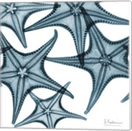 Starfishes Fine-Art Print