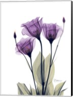 Gentian Hope Fine-Art Print