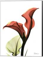 Calla Lily Red Fine-Art Print