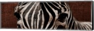 Zebra Eyes Fine-Art Print