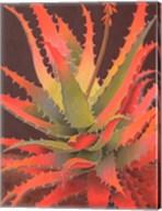 Sunset Agave Fine-Art Print