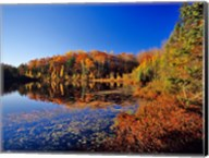 Pond in the Chaquamegon National Forest, Cable, Wisconsin Fine-Art Print